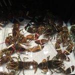 o tanque das lagostas
