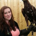 Shadow the golden eagle.