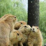 cute little guys