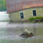 old boathouse and seagull