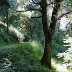 el bosque que le rodea