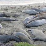 The sights nearby: Elephant seals!