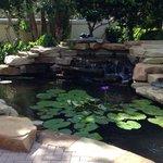 Pond by pool