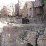 Bare Bear.. at home...