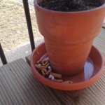 Cigs ends in plant pot on out side table