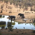 Elephants at the watering hole - view from bar deck of hotel