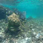 Buceando en los arrecifes