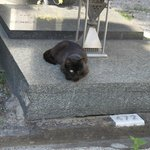 one eyed black cat