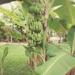 庭あるフルーツ
