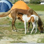 New baby pony and mama in our campsite!