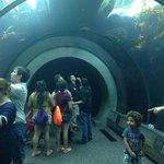 underwater viewing tunnel