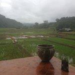 beautiful rice paddies!