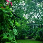 Beautiful tropical garden surrounded at Raintree spa