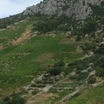 wineyards above the village, climbing to cave