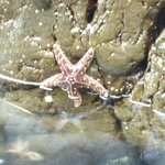 lots of starfish