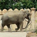 Elefanten Gehege Juli 2014