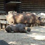 Nashorn Gehege Juli 2014