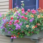 gorgeous window boxes
