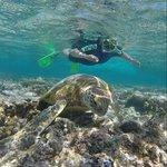 green turtles in lagoon