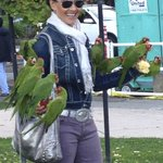 The famous Wild Parrots of Telegraph Hill