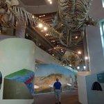 Large marine display