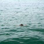 crab on long voyage