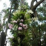 Orquídeas en el bosque