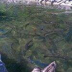 look at the fish