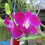 Beautiful orchid near pool
