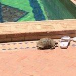 La tortue du Riad