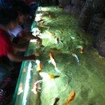 Fish petting