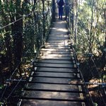 Part of the suspended walk through the forest canopy at O'Rileys