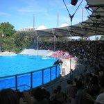 Espectáculo dos golfinhos