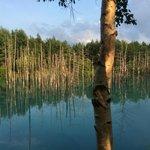 青い池7月晴れ