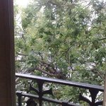 dove's nest outside our window