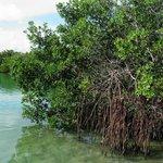 il lago con le Mangrovie
