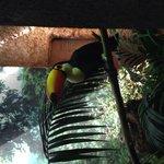 Coco toucan