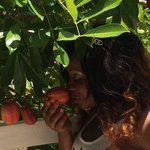 Smelling the Ackee at the blue house