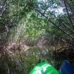 Curry Hammock mangrove trail