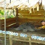 next to a giant Leatherback sea turtle
