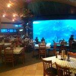 Huge shark tank in main dining room.