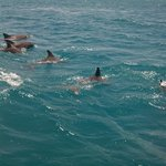 From Treasure Beach to Pelican Bar Dolphins in the Wild
