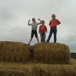 Kings of the hay stack