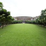 Frangipani trees around the lawn.