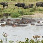 Hippo Lake