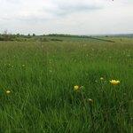 The wild-flower meadow...