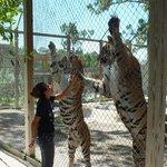 Kara and Tigers