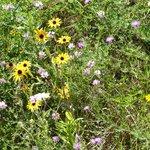 Wildflowers along the train tracks