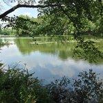 Parks Pond