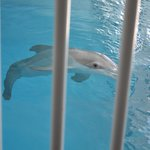 Winter la delfín